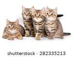 Stock photo four striped kitten isolated on white 282335213