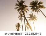 tropical coconut palm tree... | Shutterstock . vector #282382943