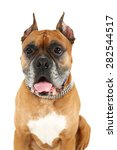 cute dog isolated on white... | Shutterstock . vector #282544517