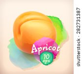 apricot  summer fruit  vector... | Shutterstock .eps vector #282731387