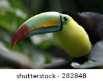 keel billed toucan | Shutterstock . vector #282848