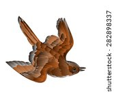 bird cub sparrow  passer... | Shutterstock .eps vector #282898337