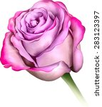 purple blue rose flower  sexy... | Shutterstock .eps vector #283123397