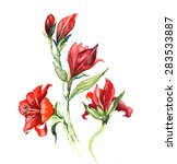 the raw flower lily watercolor... | Shutterstock . vector #283533887