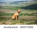 dog sitting in a meadow in the... | Shutterstock . vector #283572083