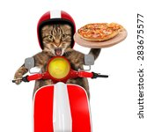 Funny Cat. Pizza Delivery