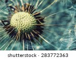 close up dandelion head in... | Shutterstock . vector #283772363