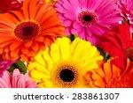 daisy flower gerbera bouquet... | Shutterstock . vector #283861307