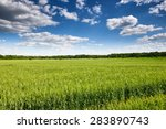 wheat field and blue sky summer ... | Shutterstock . vector #283890743