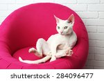 beautiful white cat on soft...