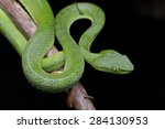 close up image of a green... | Shutterstock . vector #284130953