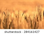 wheat field of focus from the... | Shutterstock . vector #284161427