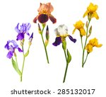 Various Colorful Irises...