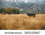 cows and bulls grazing on... | Shutterstock . vector #285320867