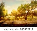 Olive Orchard.
