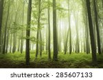 Trail In A Foggy Forest During...