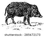 peccary or javelina or skunk... | Shutterstock .eps vector #285672173