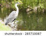 Image Of Grey Heron Ardea...