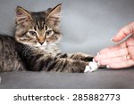 Stock photo girl plays with a kitten 285882773