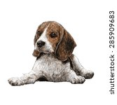 image of beagle hand drawn... | Shutterstock .eps vector #285909683