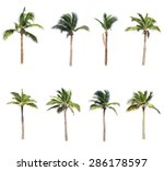 coconut trees on white... | Shutterstock . vector #286178597