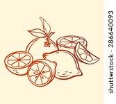 vector fruits. limes  orange... | Shutterstock .eps vector #286640093