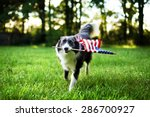 Stock photo happy dog playing outside and carrying the american flag 286700927