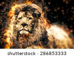 African Lion Illustration