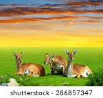 herd of red lechwe antelope at... | Shutterstock . vector #286857347
