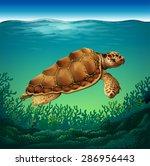 Huge Brown Turtle Swimming In...