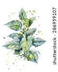 vector watercolor illustration...   Shutterstock .eps vector #286959107