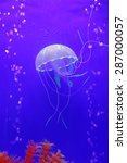 jellyfish  is the important... | Shutterstock . vector #287000057
