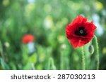 poppy flower with blur summer... | Shutterstock . vector #287030213
