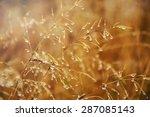 Drops Of Rain On Dry Grass