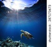 Underwater Wildlife With...