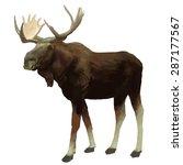 Moose Hand Drawn Vector...