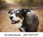 a dog out in nature looking at...   Shutterstock . vector #287187197