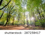 Landscape Forest With Leaf...