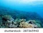 Abstract Underwater Scene  Sun...