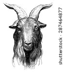 goat  vintage engraved...