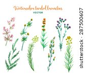 watercolor herbal vector... | Shutterstock .eps vector #287500607