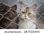 cat in a cage | Shutterstock . vector #287533493