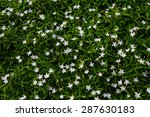 Small White Flowers And Green...