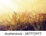 vintage effect. morning in the... | Shutterstock . vector #287772977