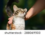 Man Stroking A Small Kitten