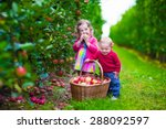 Child Picking Apples On A Farm...