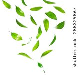 green leaves isolated on white | Shutterstock . vector #288329867