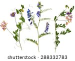 set of wild dry pressed flowers ... | Shutterstock . vector #288332783