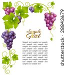 vector grape frame 3 | Shutterstock .eps vector #28843679