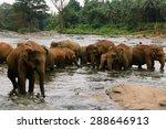 a herd of elephants are seen in ... | Shutterstock . vector #288646913